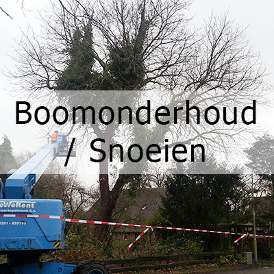 home-boomonderhoud-snoeien